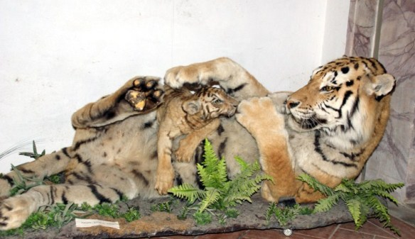 museo zoologico